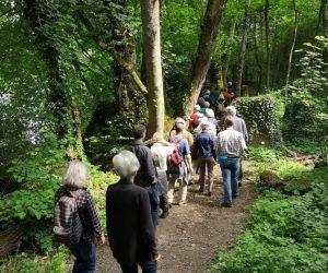 Exkursion in den Auenwald